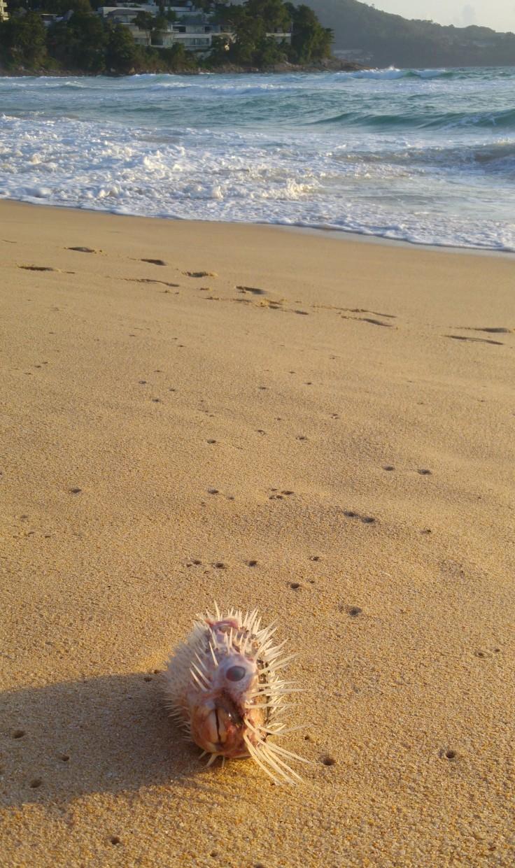 pez-en-surin-beach